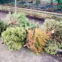 Because You Asked: How Are Christmas Trees Recycled?