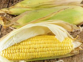 Market Haul: Sweet Corn