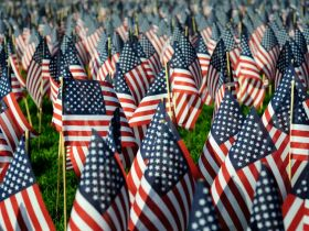 The List: 5 Green Ways to Observe Veterans Day