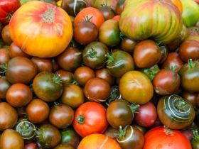 Market Haul: Heirloom Tomatoes