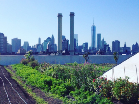 Greenly: An Urban Farm Field Trip