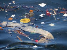 The List: 9 Garbage Patch Facts that Will Convince You to Waste Less Plastic