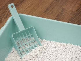 Because You Asked: Can I Compost Kitty Litter?