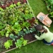 The List: 6 Reasons to Start Planning (and Planting!) Your Garden Now