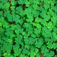 Make St. Patrick's Day Even Greener With Smart Glass Use