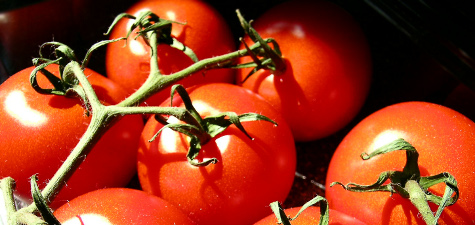 grow vegetables tomatoes